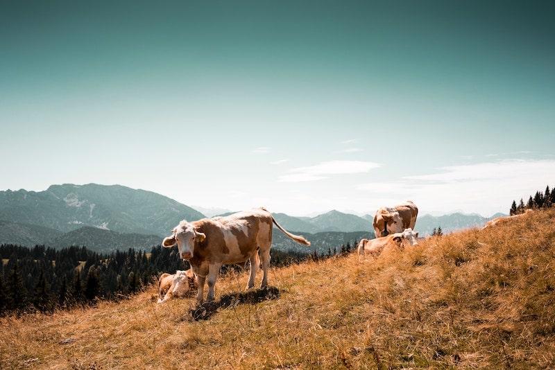 牛革のイメージ