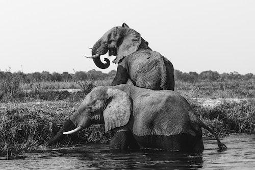 象革のイメージ