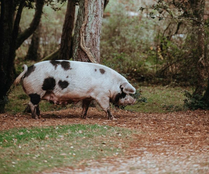 豚革のイメージ