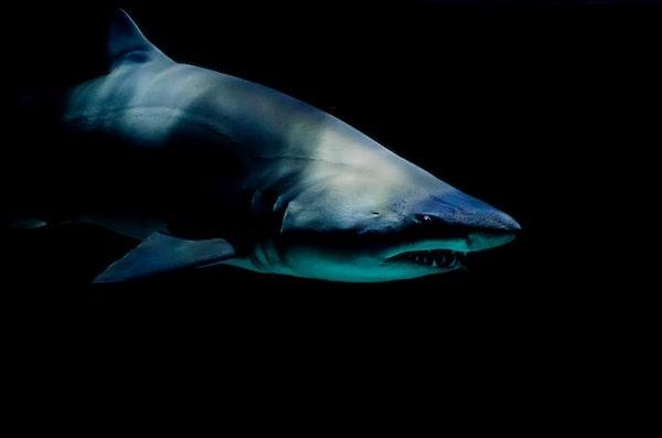 鮫革のイメージ