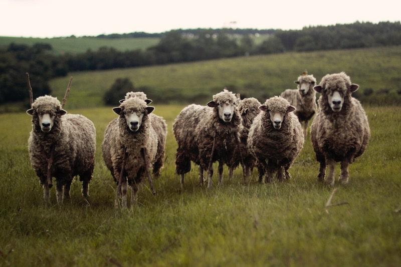 羊革のイメージ