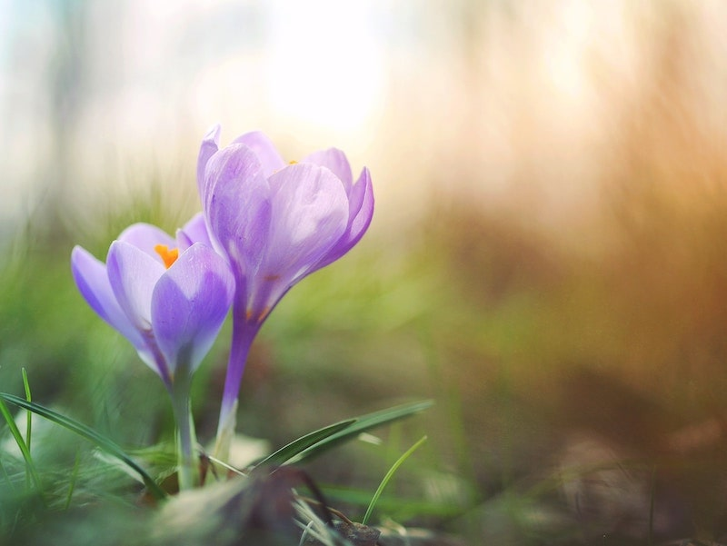 【紫色(パープル)】地位向上やスキルアップが狙える