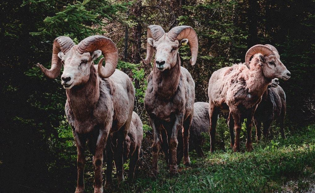 山羊革財布の特徴や手入れ方法。牛革より丈夫って知ってましたか?